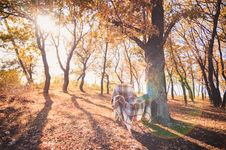 Free Armchair With Plaid In Autumn Forest Stock Photography - 28712012