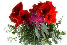 Free Amaryllis, Nerine, Eucalyptus Royalty Free Stock Images - 28712219