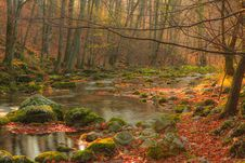 Free Beautiful Autumn Foliage And Mountain Stream In The Forest Royalty Free Stock Photo - 28714775