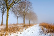 Free Sunny Yet Foggy Trail In Winter Stock Photo - 28719110