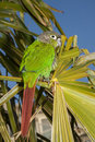 Free Parrot Stock Photography - 28725012