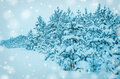 Free Snowy Forest. Stock Photography - 28726572