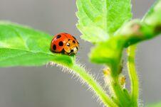 Free Beetles. Royalty Free Stock Photo - 28723235