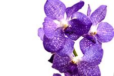 Free Violet Orchid Stock Photos - 28724563