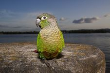 Free Parrot Royalty Free Stock Photography - 28725047