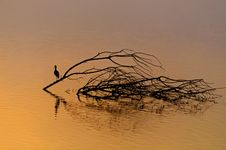 Beautiful Sunrise And Reflection Of A Bird In Hagamon Lake Stock Photos