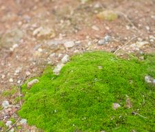 Free The Moss. Royalty Free Stock Image - 28727376