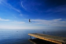 Seagull Wooden Pier Stock Images