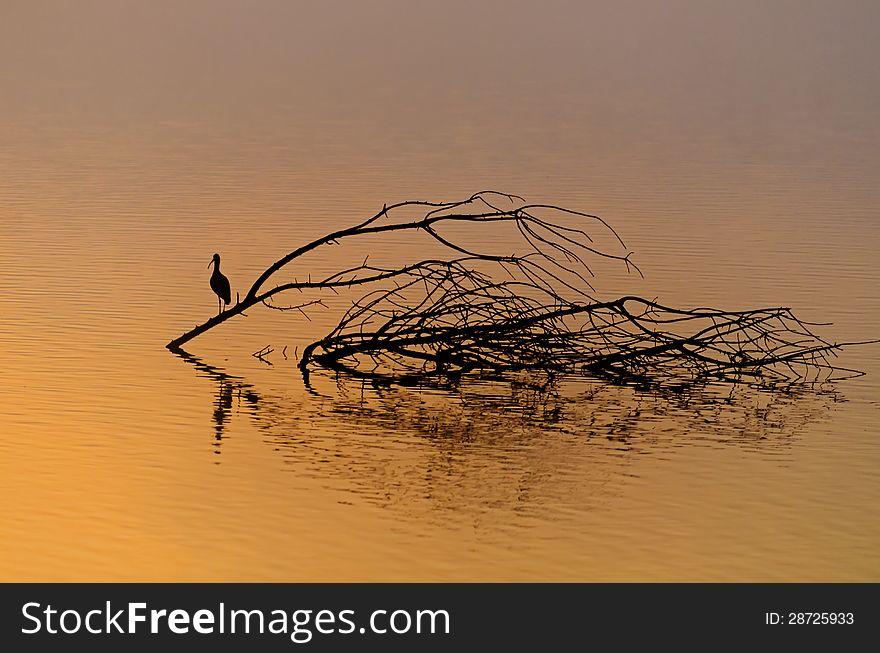 Beautiful sunrise and reflection of a bird in hagamon lake