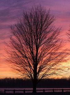 Free Tree In Winter Sunset Stock Image - 28732361