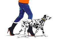 Free Dalmatian Stock Images - 28733264
