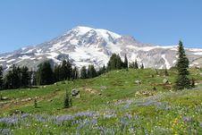 Free Mt Rainier Summer Alpine Meadows Stock Images - 28733294