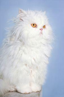 Free White Persian Cat Stock Image - 28744181