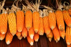 Free Dried Corn Stock Photo - 28748440