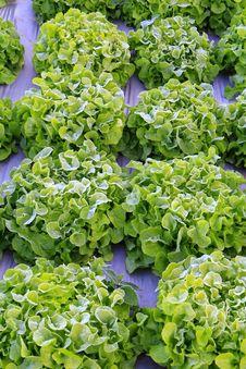 Free Vegetable Garden Royalty Free Stock Photo - 28748555
