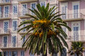 Free Palm Trees On The Promenade Des Anglais In Nice Stock Image - 28750871