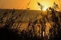 Free Beautiful Sunrise In Hagamon Lake Stock Photography - 28753882