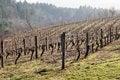 Free Vineyards, Northern Willamette Valley Stock Photos - 28756553