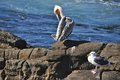 Free Pelican And Seagull Stock Photos - 28758433