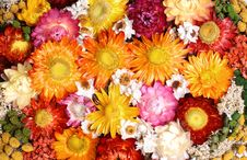 Free Dried Flowers Stock Images - 28752194