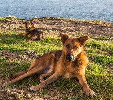 Free Stray Dogs At Coast Royalty Free Stock Image - 28757146
