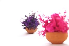 Free Violate & Pink Flower Bouquet On White Stock Photo - 28758120