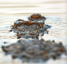 Free A Crocodiles Point Of View Royalty Free Stock Images - 28771029