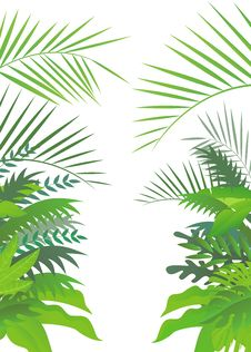 Free Tropical Forest Background Stock Images - 28772374