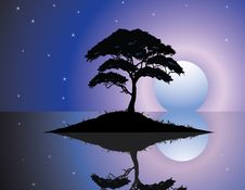 Free Black Silhouette Of Old Tree At Night Scene Stock Image - 28772431