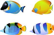 Free Tropical Fish Collection Royalty Free Stock Photos - 28772478