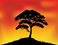 Africa Landscape Background Stock Image