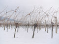 Free Vineyard In The Winter Time Royalty Free Stock Images - 28782389