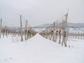 Free Vineyard In The Winter Time Royalty Free Stock Images - 28782429