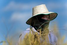 Free Rice Farmer Portrait Royalty Free Stock Image - 28780286