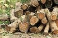 Free Wood Log Stock Photography - 28799802