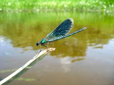 Free Dark Blue Dragonfly Sitting Above Water Stock Photos - 28795163