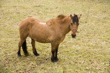 Free Horse Stock Photo - 28795820