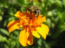 Free Cornflower Stock Images - 2880364