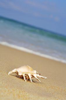 Sea Shell On Shore Stock Photo