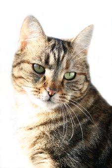 Free Cat Portrait Stock Photos - 2883203