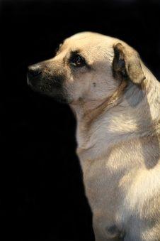 Free Dog Portrait Stock Photos - 2883263
