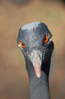 Free Crane Head Stock Photos - 2886413