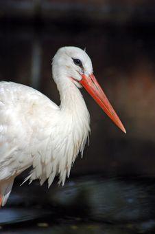 Free White Stork Stock Photos - 2886463