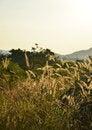 Free Morning Landscape. Royalty Free Stock Photo - 28801715
