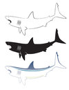 Free White Shark Royalty Free Stock Images - 28804819