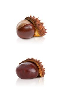 Free Chestnut In A Skin On A White Background Royalty Free Stock Images - 28802279