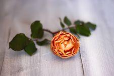 Free Rose Photo Royalty Free Stock Image - 28813806