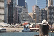 Free Bird In Manhattan Stock Photography - 28814612