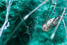 Free Giant House Spider Stock Photos - 28819603