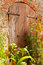 Free Grunge Door With Evergreen Plants Royalty Free Stock Photos - 28814078